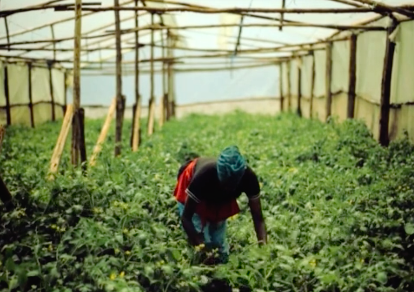 Kenya farming