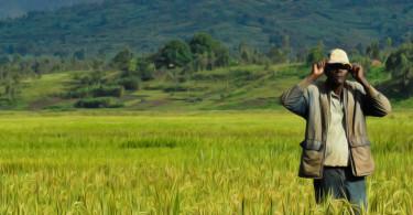 farmer-in-field