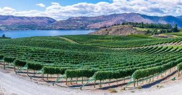 wine and impact investing